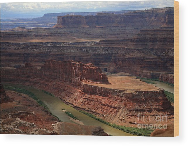 Colorado River Wood Print featuring the photograph Deadhorse Point by Timothy Johnson