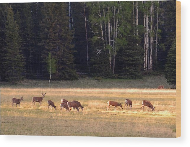 Deer Wood Print featuring the photograph Deer at Kaibab Meadows by Neil Doren