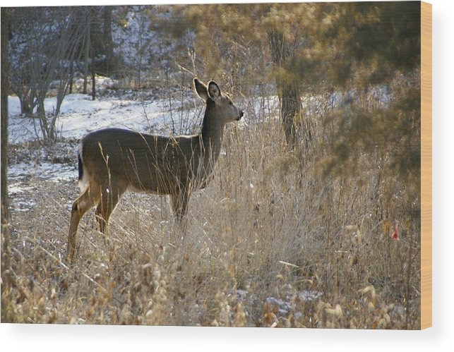 Deer Wood Print featuring the photograph Deer in Morning light by Toni Berry