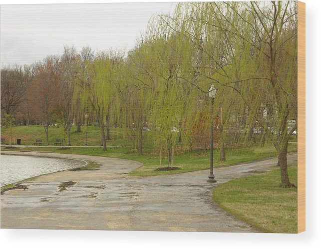 Landscape Park Washington Willow Tree Lake Wood Print featuring the photograph Dnrf0401 by Henry Butz