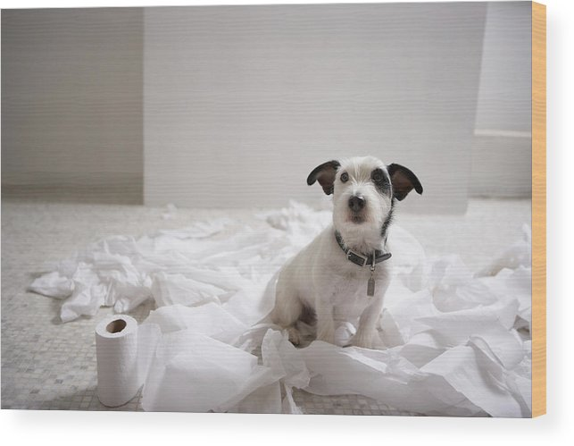 Horizontal Wood Print featuring the photograph Dog Sitting On Bathroom Floor Amongst Shredded Lavatory Paper by Chris Amaral