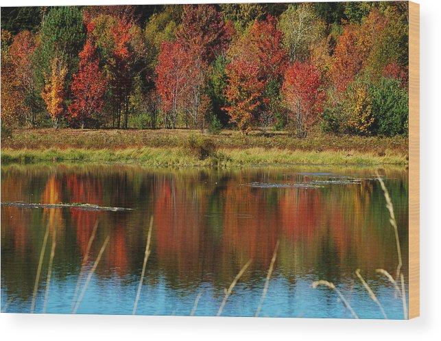 Autumn Wood Print featuring the photograph Fall Splendor by Linda Murphy