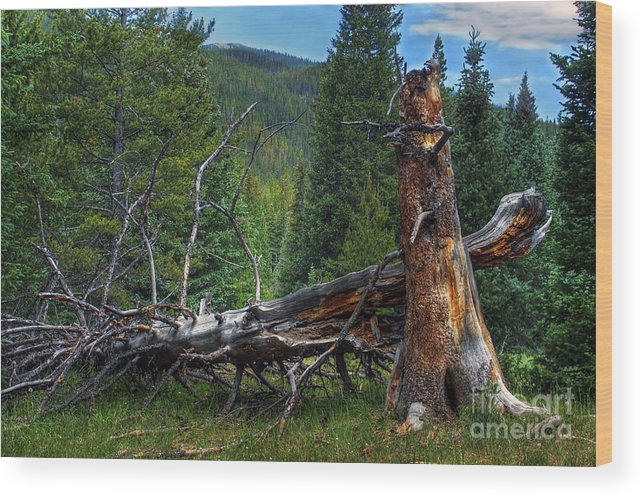 Landscape Wood Print featuring the photograph Fallen Tree by Pete Hellmann