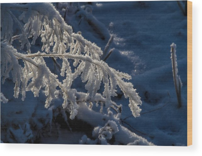 Frost Wood Print featuring the photograph First Light by Alana Thrower