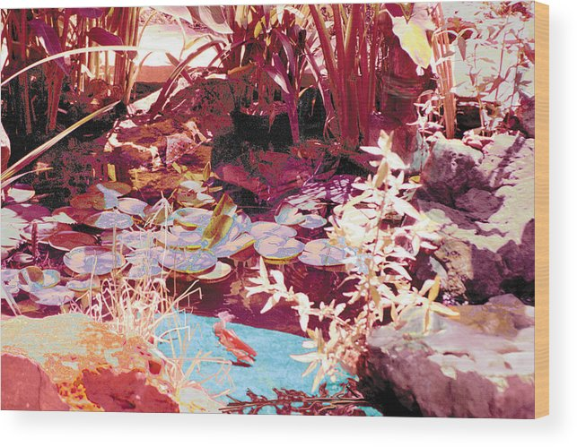 Koi Wood Print featuring the photograph Floating Lilies Pads Above The Koi. by Judy Loper