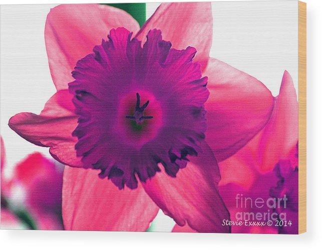 Pink Fuchsia Bloom Flower Daffodil Edit Photograph Digital Modern Edge Nature Wood Print featuring the photograph Fuchsia by Stevie Ellis