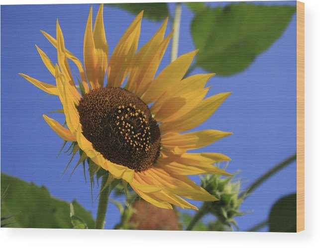 Flowers Wood Print featuring the photograph Good Morning by Alan Rutherford