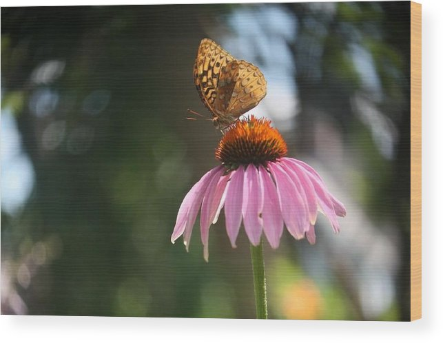 Butterfly Wood Print featuring the photograph Great Spangled Fritillary by Debra Sandstrom