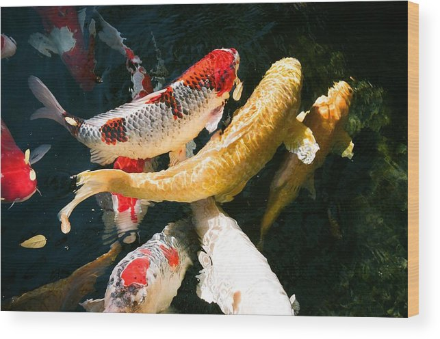 Fish Wood Print featuring the photograph Group of Koi Fish by Dean Triolo