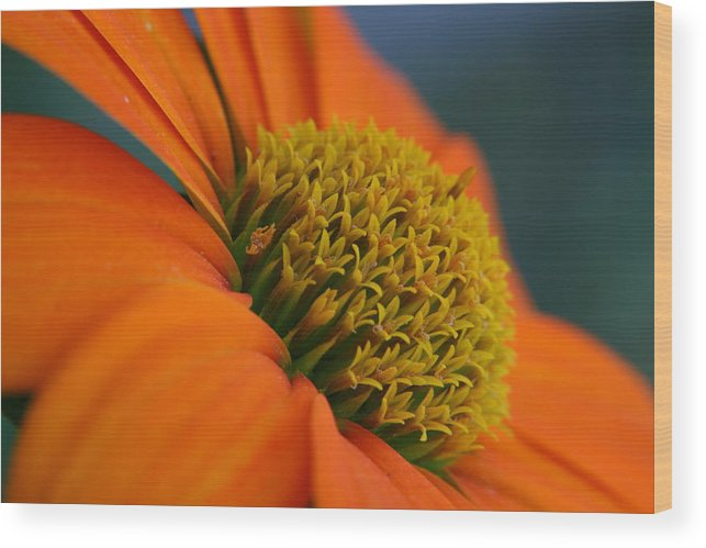 Orange Flower Wood Print featuring the photograph Happy by Linda Russell