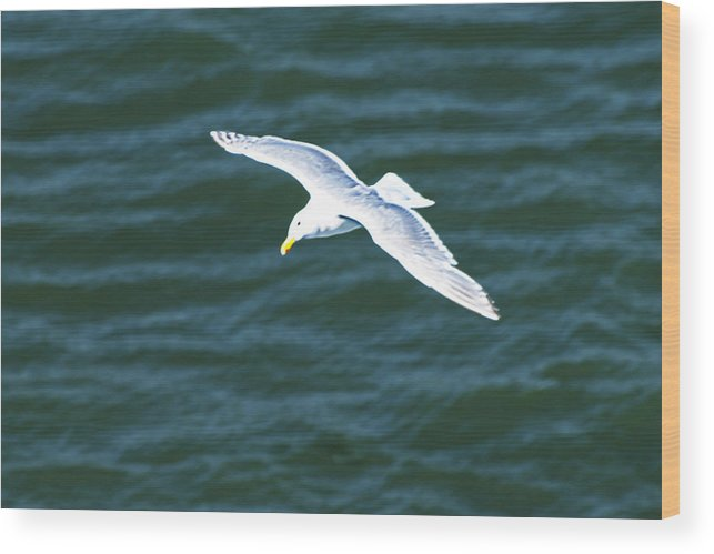Seagull Wood Print featuring the photograph Jonothan Livingston Birdie by Richard Henne