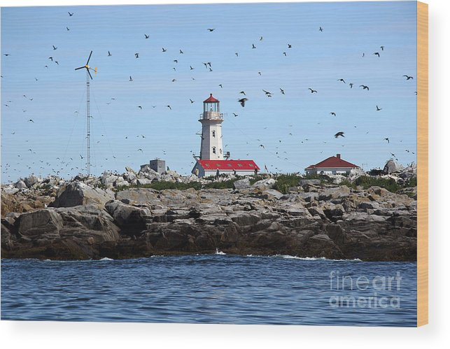 Machias Seal Island Wood Print featuring the photograph Machias Seal Island Lighthouse by Brenda Giasson