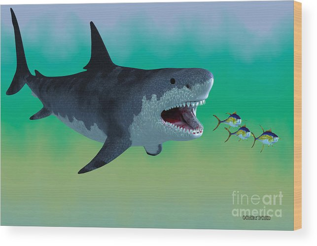 Megalodon Shark Attack Wood Print By Corey Ford