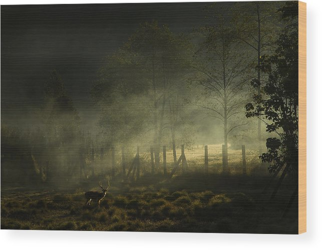 Nature Wood Print featuring the photograph Misty Morning by Nunu Rizani