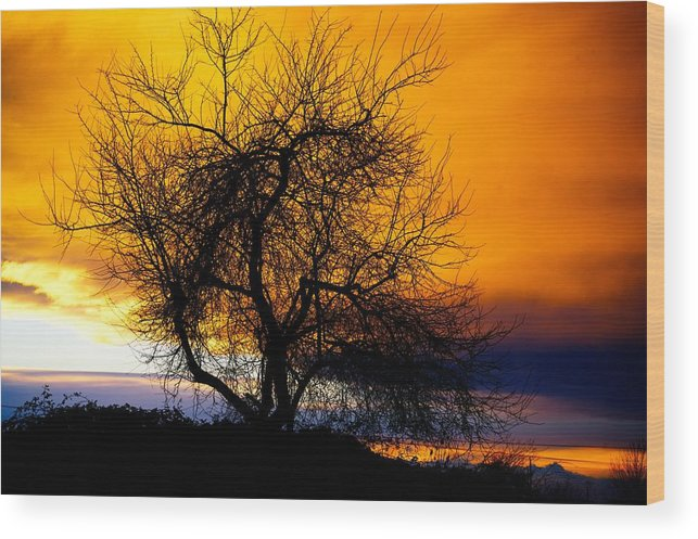 Tree Wood Print featuring the photograph Naked Tree by Paul Kloschinsky