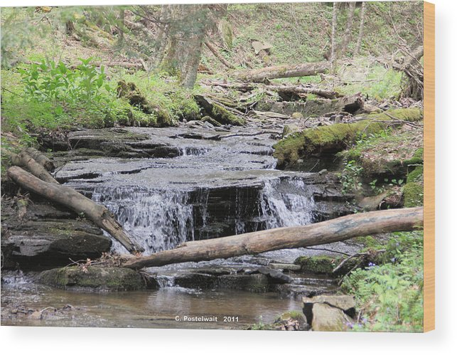 Streams Wood Print featuring the photograph Native Trout Stream by Carolyn Postelwait