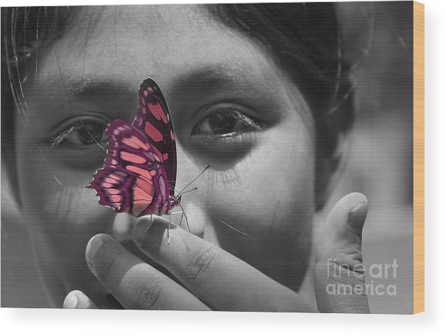 Butterfly Wood Print featuring the photograph Nosey by Katherine Morgan
