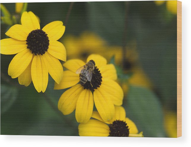 Yellow Wood Print featuring the photograph One bee over the flower's nest by Adrian Bud