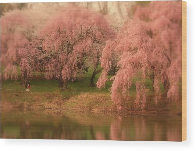 Cherry Blossom Trees Wood Print featuring the photograph One Spring Day - Holmdel Park by Angie Tirado