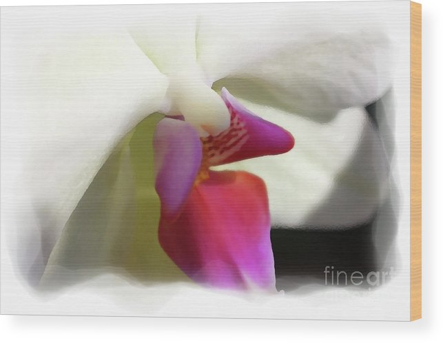 Orchid Wood Print featuring the photograph Orchid 1 by David Bearden