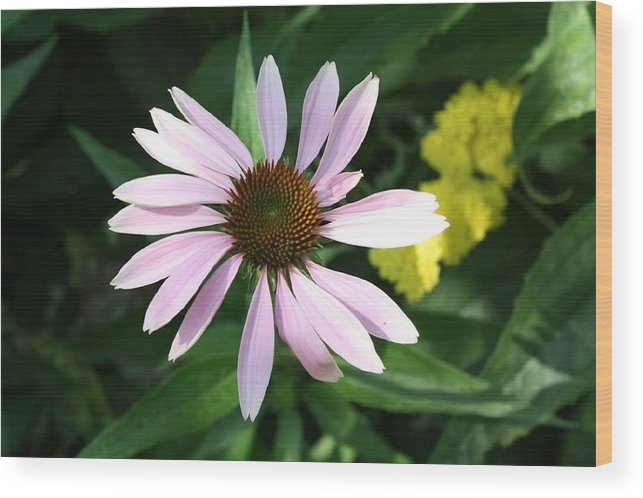 Pink Cone Flower Wood Print featuring the photograph Pink Cone Flower 2 by Debra Sandstrom