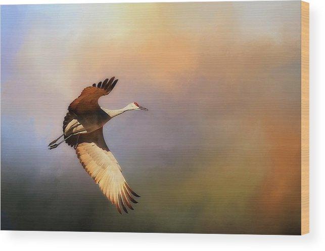 Nature Wood Print featuring the photograph Power Stroke, Sandhill Crane, Bosque del Apache, New Mexico by Zayne Diamond Photographic