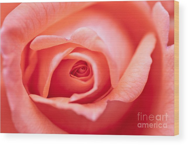 Abstract Wood Print featuring the photograph Rose Petals by Michal Boubin