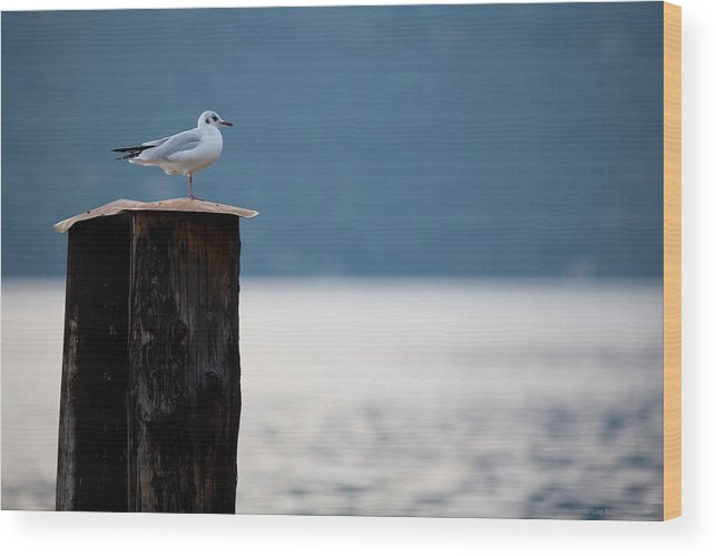 Italy Wood Print featuring the photograph Seagull by Luigi Barbano BARBANO LLC