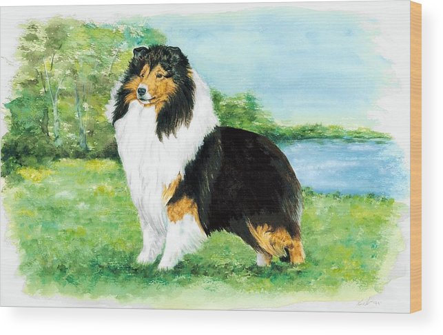 Shetland Sheepdog Wood Print featuring the painting Sheltie Wait by Kathleen Sepulveda