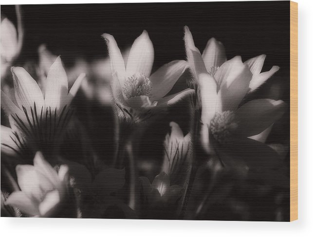 Flowers Wood Print featuring the photograph Sleepy Flowers by Marilyn Hunt