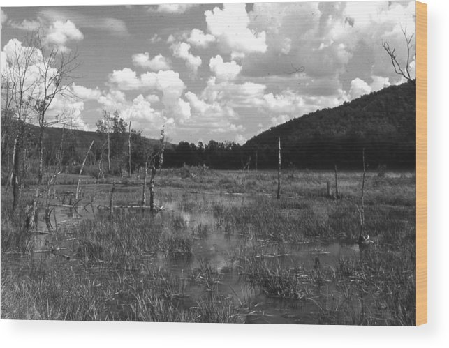 Ansel Adams Wood Print featuring the photograph swamp1-OEM by Curtis J Neeley Jr
