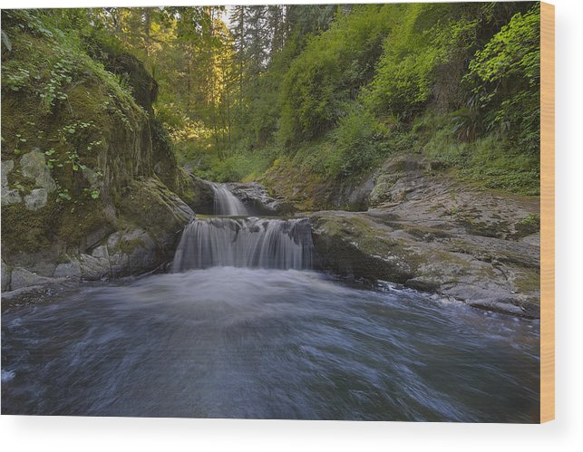 Sweet Creek Falls Trail Complex Wood Print featuring the photograph Sweet Little Waterfall by David Gn