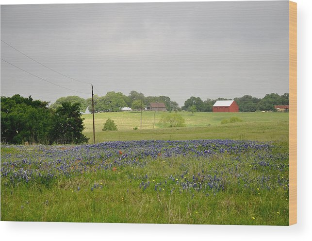 Texas Wood Print featuring the photograph Texas Bluebonnets by Keith Gondron