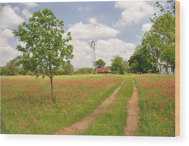 Texas Wood Print featuring the photograph Texas Wildflowers by Keith Gondron