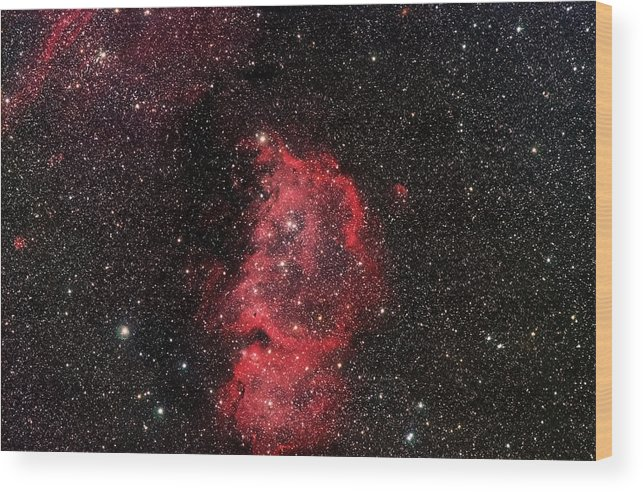 Stars Wood Print featuring the photograph The Emperor by Jim DeLillo