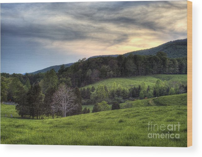 Landscape Wood Print featuring the photograph The Late Bloomer by Pete Hellmann