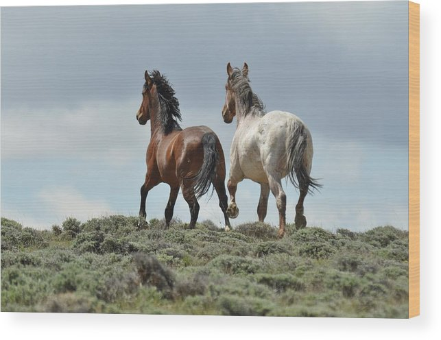 Wild Horses Wood Print featuring the photograph Too Beautiful by Frank Madia