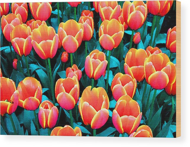 Wood Print featuring the photograph Tulips in Holland by Gene Sizemore