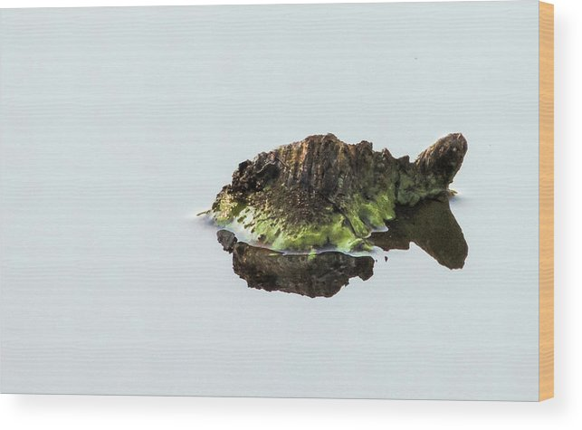 Turtle Wood Print featuring the photograph Turtle or Mountain by Randy J Heath