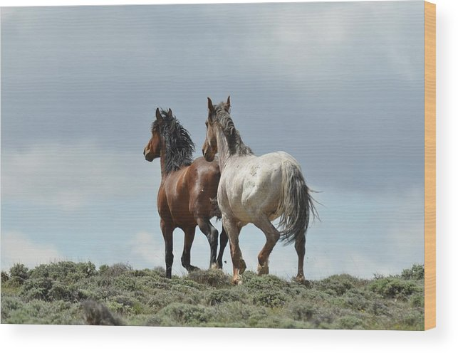 Wild Horses Wood Print featuring the photograph We Will Be Over the Hill in a Few Seconds by Frank Madia