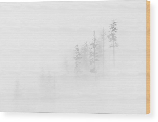 Winter Wood Print featuring the photograph Winter Veil by Mike Dawson