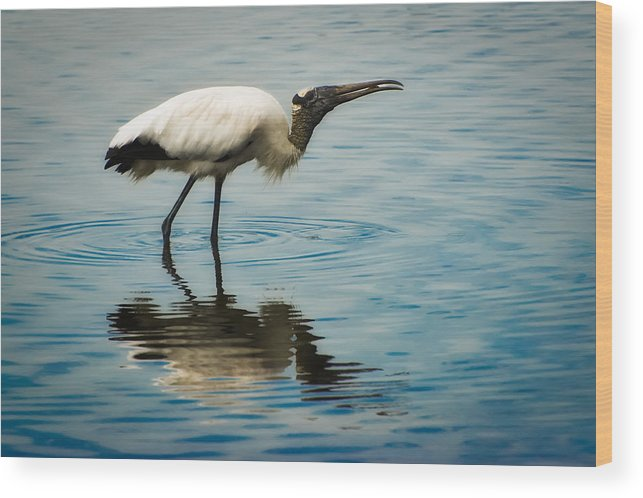 Stork Wood Print featuring the photograph Wood Stork by Rich Leighton