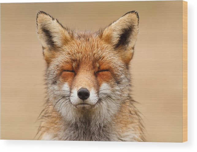 Red Fox Wood Print featuring the photograph Zen Fox Red Fox Portrait by Roeselien Raimond