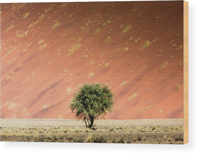 Tranquility Wood Print featuring the photograph Namib Desert by Manuel Romaris
