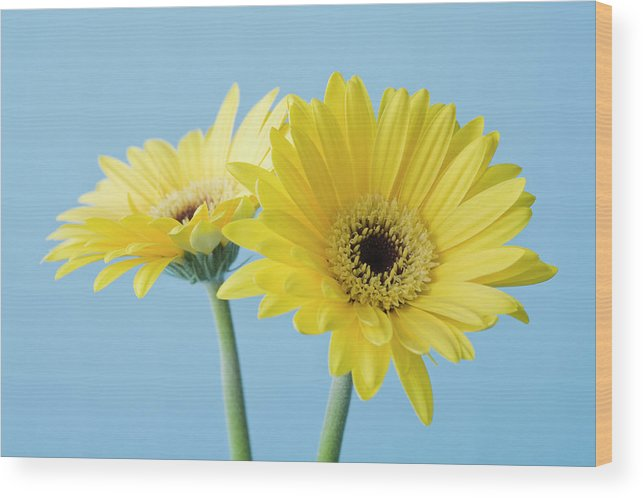 Two Objects Wood Print featuring the photograph Yellow Flowers On Blue Background by Kristin Lee