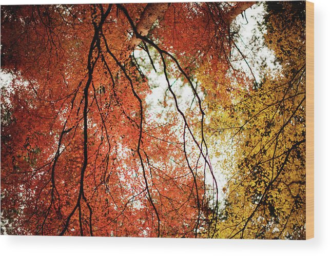 Tranquility Wood Print featuring the photograph Fall Colors In Japan by Jdphotography