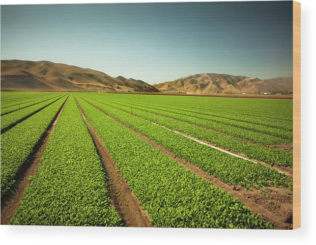 Environmental Conservation Wood Print featuring the photograph Crops Grow On Fertile Farm Land by Pgiam