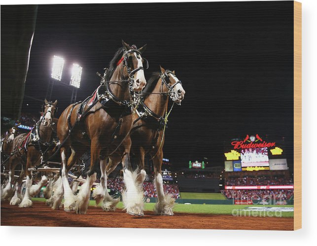 Horse Wood Print featuring the photograph World Series - Boston Red Sox V St by Ronald Martinez