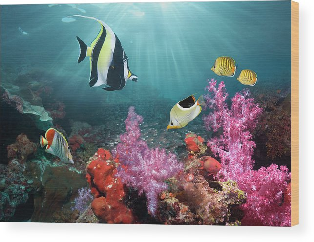 Tranquility Wood Print featuring the photograph Coral Reef Scenery by Georgette Douwma