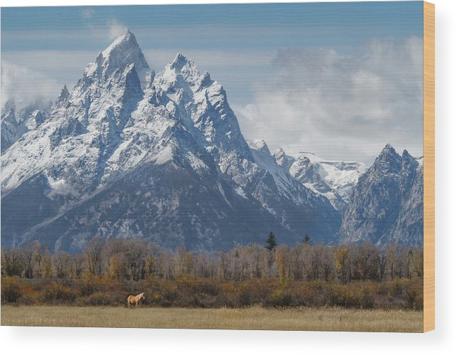 Grand Teton Wood Print featuring the photograph A Horse In Front Of The Grand Teton by Galloimages Online